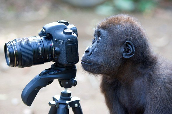 Any Monkey With a Camera Thinks He is a Photographer