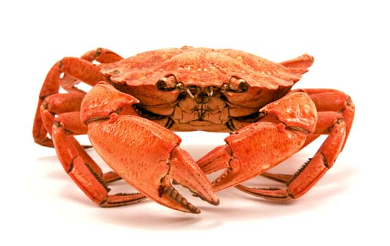 Crab Eating Chow Video – Loy Machedo Recommends