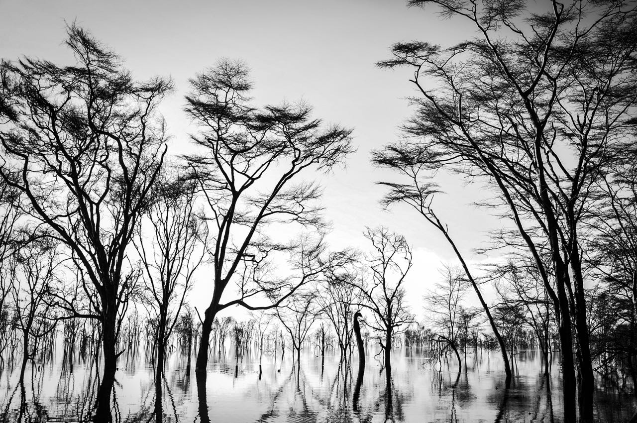 Jaison Mandapathil Photography Silent Nature
